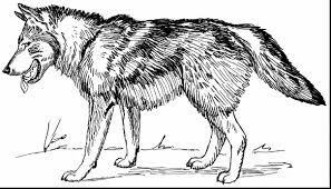 Impressive Wolves For Coloring With Pages And Printable