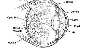Human Muscle Coloring Pages Eye Anatomy Page