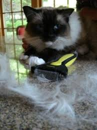 Shedding Blade Vs Furminator by Shedmonster Cat Shedding Tool Product Review