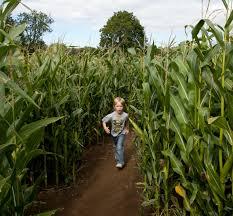 Pumpkin Picking Nj Corn Maze by 100 Best Pumpkin Patches Near Portland Cc Fun For Kids 2015