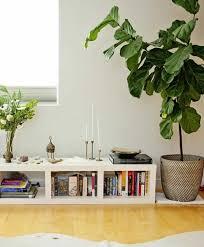 zimmerpflanzen bilder gemütliche deko ideen mit topfpflanzen