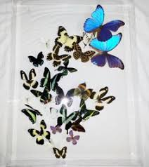 Real Butterfly Swarm Acrylic Shadowbox Art Wall By ResinGallery 38500