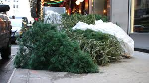 Saran Wrap Xmas Tree by How To Dispose Of Your Old Christmas Tree In Nyc Curbed Ny