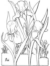 7 Floral Adult Coloring Pages New Iris