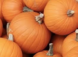 Connecticut Field Pumpkin For Pies by 10 Easy Pieces Best Pumpkins Gardenista
