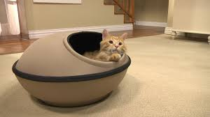 Drs Foster And Smith Dog Beds by Hideaway Style Cat Bed Ideal For Your Kitty Drsfostersmith Youtube
