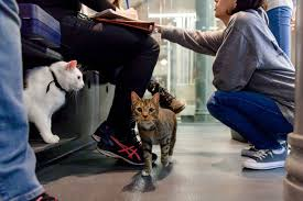 Aspca Cat Neutering Nyc - Cute Cat 2018 Nyc Aspca New York City November 14 2015 Stock Photo 100 Legal Protection Looking Back At 2017 A Remarkable Year For Animals And The Animal Health More In Our Hands Rescue Ways To Give Donate Charitable Ctributions Orange Car Seat Cover Dogs Walmartcom Stellas Spay Day With Mobile Spayneuter Clinic Youtube These Oldtimey Photos Hlight 150 Years Of The Saving Grants American Society Prevention Of Cruelty Aspca Hashtag On Twitter