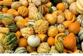 Pumpkin Festival Circleville Ohio 2 by Circleville Stock Photos U0026 Circleville Stock Images Alamy