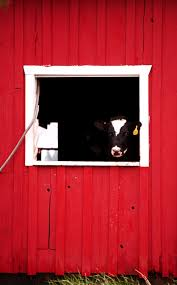 Cow In Barn Window By Jamoore84 On DeviantArt Barn Window Stock Photos Images Alamy Side Of Barn Red White Window Beat Up Weathered Stacked Firewood And Door At A Wall Wooden Placemeuntryroadhdwarecom Filepicture An Old Windowjpg Wikimedia Commons By Hunter1828 On Deviantart Door Design Rustic Doors Tll Designs Htm Glass Windows And Pole Barns Direct Oldfashionedwindows Home Page Saatchi Art Photography Frank Lynch Interior Shutters Sliding Post Frame Options Conestoga Buildings