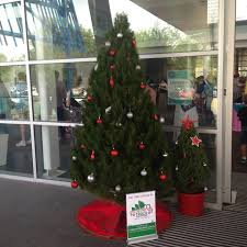 Are Christmas Trees Poisonous To Dogs by The Christmas Tree Truck Real Christmas Trees In Canberra