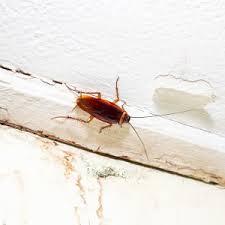 käfer im haus ungeziefer bestimmen und wirkungsvoll bekämpfen
