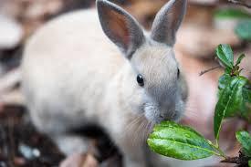 Can Rabbits Eat Pumpkin Seeds by Rabbit Proof Plants Plants Rabbits Won U0027t Eat