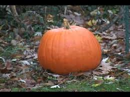 Keep My Pumpkin From Rotting by Decaying Halloween Pumpkin Time Lapse Youtube