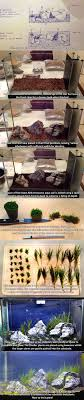 Best 25+ Aquarium Ideas On Pinterest | Aquarium Ideas, Aquascaping ... How To Set Up An African Cichlid Tank Step By Guide Youtube Aquascaping The Art Of The Planted Aquarium 2013 Nano Pt1 Best 25 Ideas On Pinterest Httpwwwrebellcomimagesaquascaping 430 Best Freshwater Aqua Scape Images Aquascape Equipment Setup Ideas Cool Up 17 About Fish Process 4ft Cave Ridgeline Aquascape A Planted Tank Hidden Forest New Directly After Setting When Dreams Come True