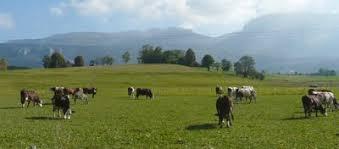 chambre d agriculture auvergne quelle politique agricole pour quelle agriculture demain