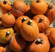 Oklahoma Pumpkin Patch Directory by Pumpkin Crop Looks Good But Delayed By Rains Agriculture