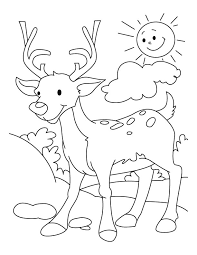 Deer Coloring Pages For Kindergarten