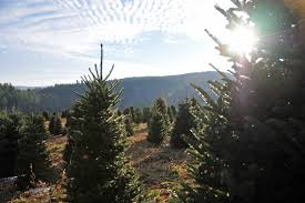 Aspirin For Christmas Tree Life by Trees At Enchantedlearning Com Christmas Ideas