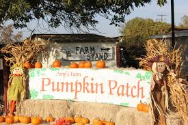 Pumpkin Patch With Petting Zoo Inland Empire by Pumpkin Patch At Amy U0027s Farm