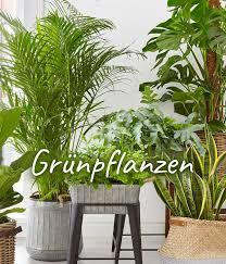 prachtvolle pflanzen bestellen dehner