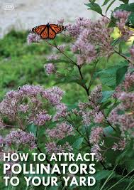 Attracting Insects To Your Garden by Bee Beautiful U2013 5 Tips To Attract Pollinators To Your Backyard