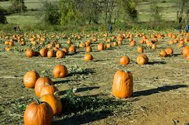Pumpkin Patch In Long Island New York by 5 The Great Pumpkin Farm Clarence N Y From The 10 Best Pumpkin