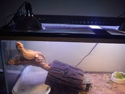 Basking Lamp Wattage For Bearded Dragon by How Can I Improve My Bearded Dragon U0027s Enclosure