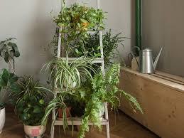 dschungel im wohnzimmer jungle heile welt in