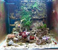 aquarium nano eau de mer aquarium eau de mer recifal debuter conseils amenagement decor