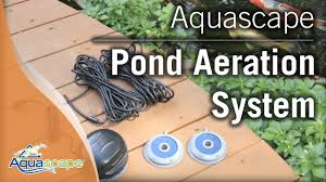 Aquascape's Pond Aeration Systems - YouTube Aquascape 61000 Pond Aerator Pro 60 Ebay Totalpond With Led Lights Youtube Neptunes Water Gardens Blogcstruction Archives Membrane Diffuser Assemblies Single Diversified Videos Statuary Pumps Blog The Store Com Lovely Replacement Cartridge Shallow Aeration System Amazoncom 75001 Air 4 Quadruple Outlet Pond Aerator 100 Images Solaer Solar Powered 3 Complete Kits
