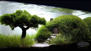 Bonsai Aquascape - YouTube Aquascape Designs For Your Aquarium Room Fniture Ideas Aquascaping Articles Tutorials Videos The Green Machine Blog Of The Month August 2009 Wakrubau Aquascaping World Planted Tank Contest Design Awards Awesome A Moss Experiment Driftwood Sale Mzanita Pieces Two Gardens By Laszlo Kiss Mini Youtube Warsciowestronytop