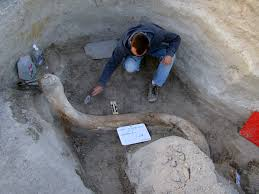 Tule Springs Fossil Beds National Monument by How Protectors Of Tule Springs Fought For Their Fossils Public