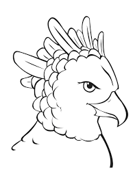 Harpy Eagle Coloring Sheet Printable Pages Golden Bald Sheets