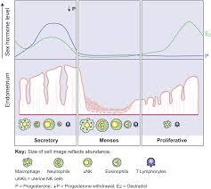 Uterine Lining Shedding While On Birth Control by Menstruation Fertilitypedia