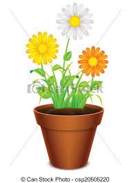 pot fleurs camomille pétales couleur pot pâquerette