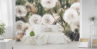 fototapeten pusteblumen größe der wand myloview de