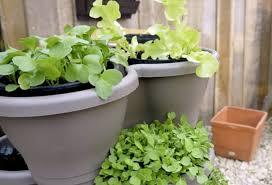 récolter plus vite grâce au potager en pot