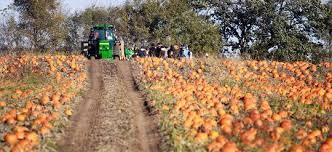 Best Pumpkin Patch Madison Wi by Wisconsin Corn Mazes