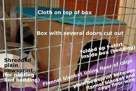 pet rat bedding litter about pet rats