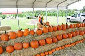 Pumpkin Patch Houston Oil Ranch by 10 Texas Pumpkin Patches That Are Worth The Trip