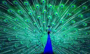 Peacock Painting HD Wallpaper