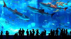 aquarium geant a visiter belgique magazine du tourisme coup de coeur l aquarium d okinawa