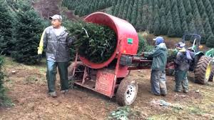 Harvest 2015 Baling A Christmas Tree
