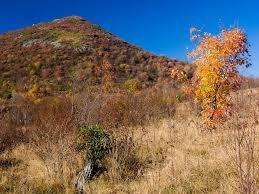 Black Balsam Knob Hiking Balds Views and High Mountain Meadows