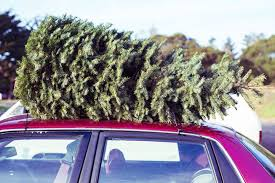 Christmas Tree Has Aphids by There Are Up To 25 000 Bugs In The Average Christmas Tree Mnn