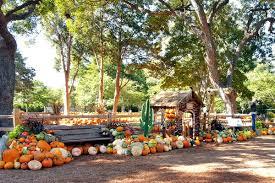 Real Pumpkin Patch Dfw by Pumpkin Village Dallas Arboretum Real Life Notes