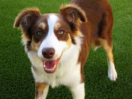 Non Shedding Dogs Small To Medium by Cute Medium Sized Dogs Breeds Dog Breeds Puppies Medium Sized