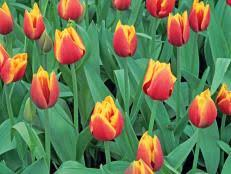q a when is it late to plant bulbs hgtv