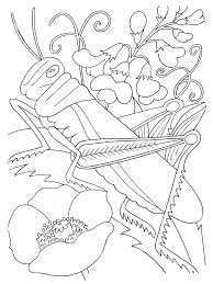 Free Printable Bug Coloring Pages For Kids New