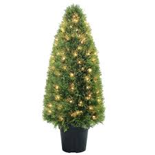 Christmas Tree Saplings For Sale by Trees Trees U0026 Bushes The Home Depot
